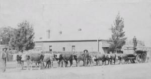Bullock Wagon Fitzroy St c1908