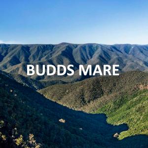 budds-mare